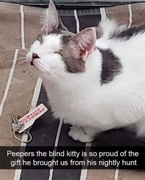 Cat - Peepers the blind kitty is so proud of the gift he brought us from his nightly hunt PITNES