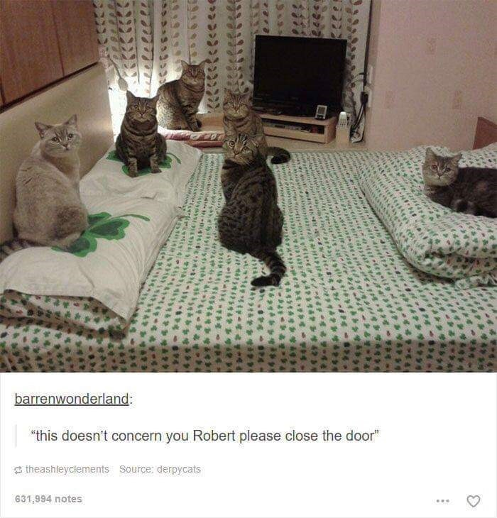 "Cat - barrenwonderland: ""this doesn't concern you Robert please close the door"" a theashleyclements Source: derpycats 631,994 notes"