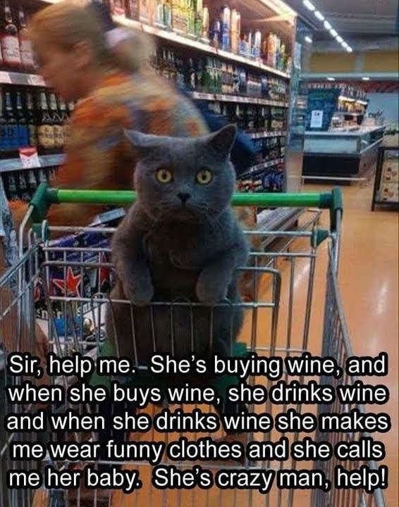 Cat - Sir, help me.-She's buying wine, and when she buys wine, she drinks wine and when she drinks wine she makes me wear funny clothes and she calls me her baby. She's crazy man, help!