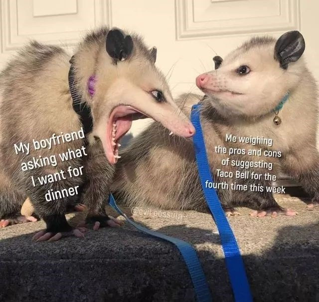 Mammal - My boyfriend, asking what I want for dinner Me weighing the pros and cons of suggesting Taco Bell for the fourth time this week @evit possum