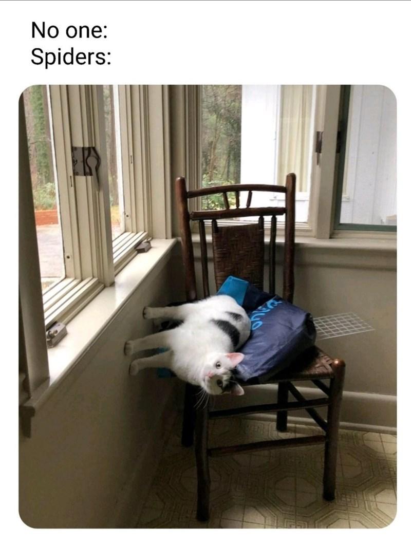 Companion dog - No one: Spiders: