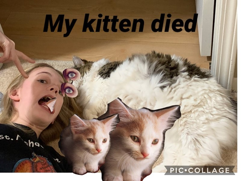 Cat - My kitten died st. sha PIC COLLAGE