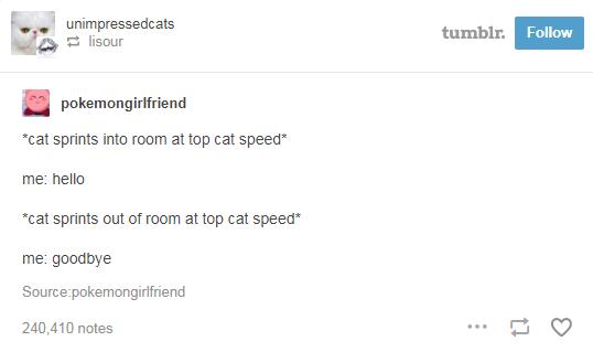 Text - unimpressedcats E lisour tumblr. Follow pokemongirlfriend *cat sprints into room at top cat speed* me: hello *cat sprints out of room at top cat speed* me: goodbye Source:pokemongirlfriend 240,410 notes