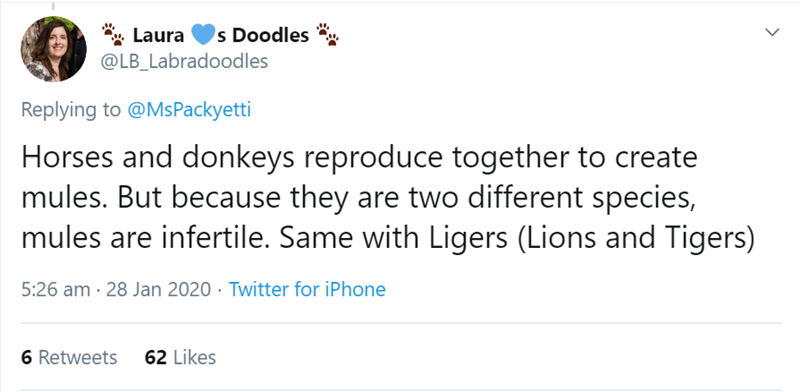 Text - *. Laura @LB_Labradoodles s Doodles Replying to @MsPackyetti Horses and donkeys reproduce together to create mules. But because they are two different species, mules are infertile. Same with Ligers (Lions and Tigers) 5:26 am · 28 Jan 2020 · Twitter for iPhone 6 Retweets 62 Likes