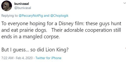 Text - bunivasal @bunivasal Replying to @PeccaryNotPig and @Choplogik To everyone hoping for a Disney film: these guys hunt and eat prairie dogs. Their adorable cooperation still ends in a mangled corpse. But I gues.. so did Lion King? 7:22 AM - Feb 4, 2020 · Twitter for iPhone