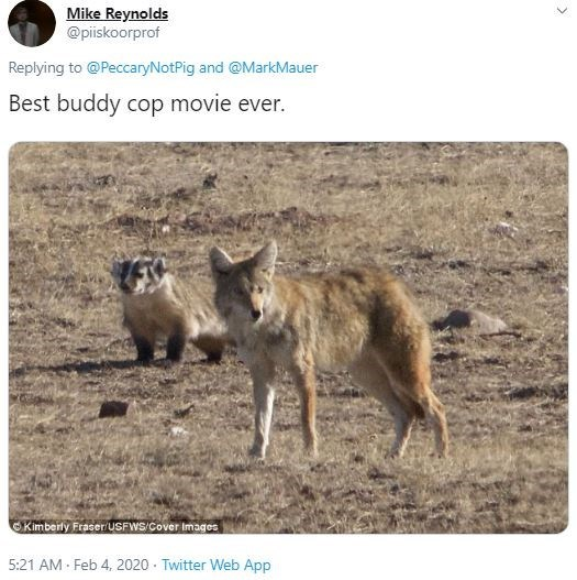 Vertebrate - Mike Reynolds @piiskoorprof Replying to @PeccaryNotPig and @MarkMauer Best buddy cop movie ever. Kimberly Fraser/USFWS/Cover Images 5:21 AM Feb 4, 2020 · Twitter Web App