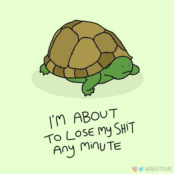 Tortoise - I'M ABOUT TO LOSE My SHIT Any MinuTE @BEASTFLAPS