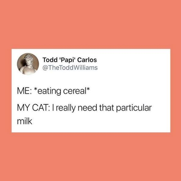Text - Todd 'Papi' Carlos @TheToddWilliams ME: *eating cereal* MY CAT: I really need that particular milk