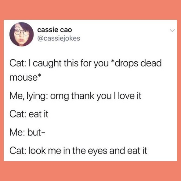Text - cassie cao @cassiejokes Cat: I caught this for you *drops dead mouse* Me, lying: omg thank you I love it Cat: eat it Me: but- Cat: look me in the eyes and eat it