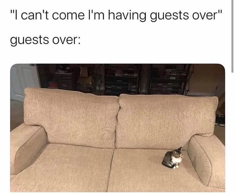 """i can't come i'm having guests over"" guests over: tiny kitten sitting all alone on a large couch"