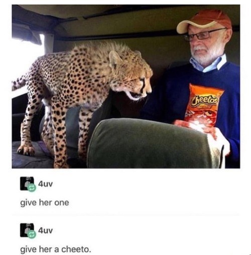 cheetah standing by a scared looking man staring at the bag of cheetos he's holding 4uv give her one 4uv give her a cheeto