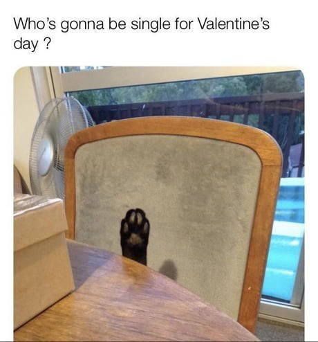 Who's gonna be single for valentine's day? cat's paw sticking up from under a table