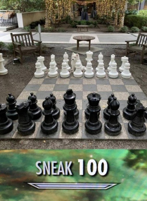 chess board with a cute fluffy dog replacing one of the white pieces. skyrim skill tree: sneak 100