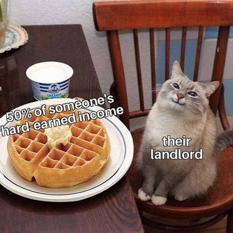object labeled meme pleased looking cat sitting by a plate with a waffle and ice cream. 50% of someone's hard earned income. their landlord.
