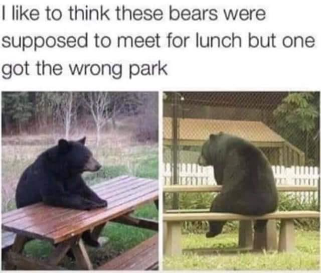 Vertebrate - I like to think these bears were supposed to meet for lunch but one got the wrong park WalL