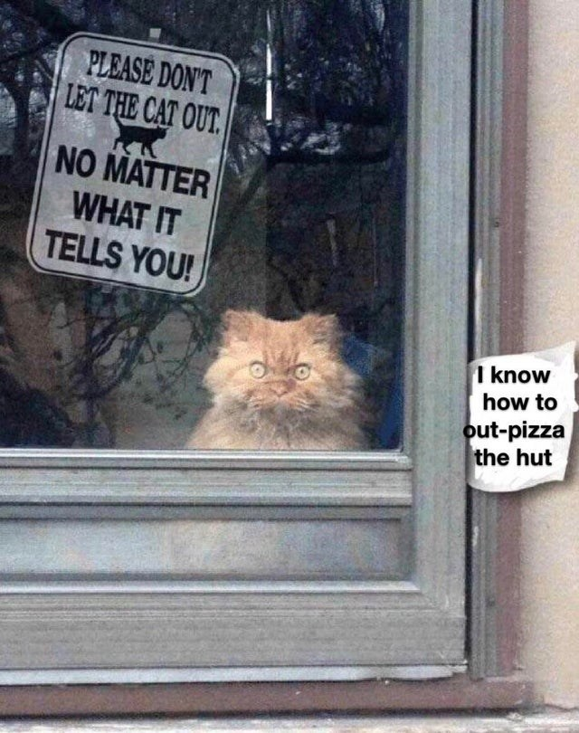 Cat - PLEASE DON'T LET THE CAT OUT NO MATTER WHAT IT TELLS YOU! I know how to out-pizza the hut