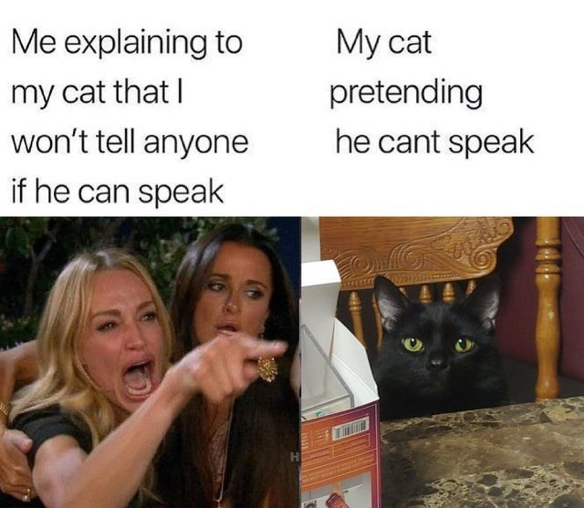 Cat - Me explaining to My cat pretending he cant speak my cat that I won't tell anyone if he can speak