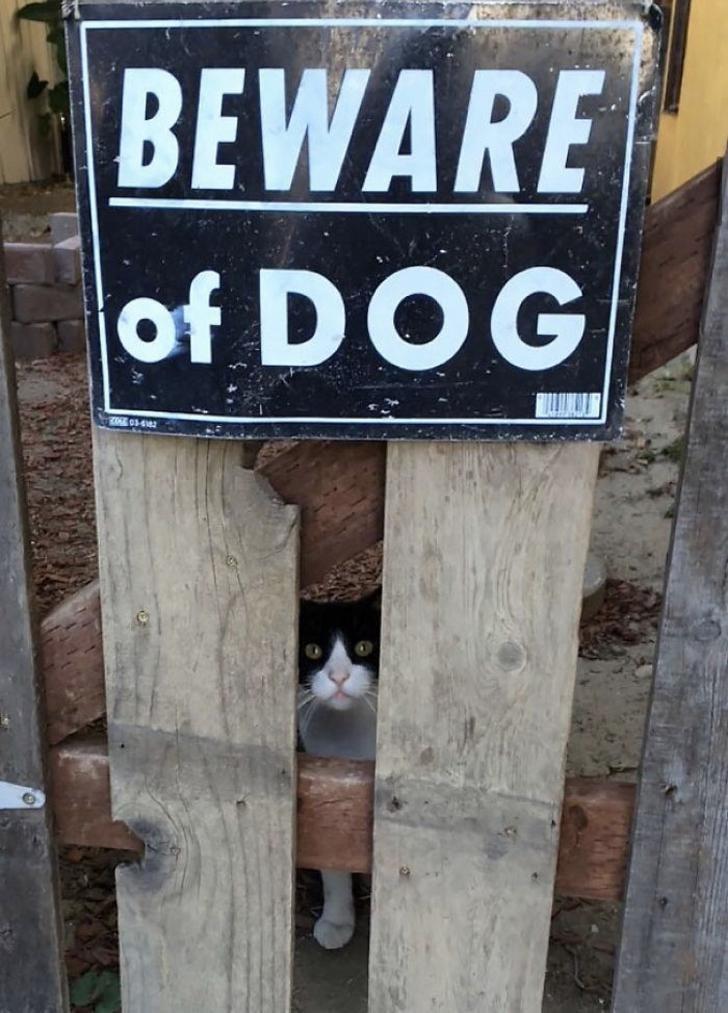 Signage - BEWARE of DOG