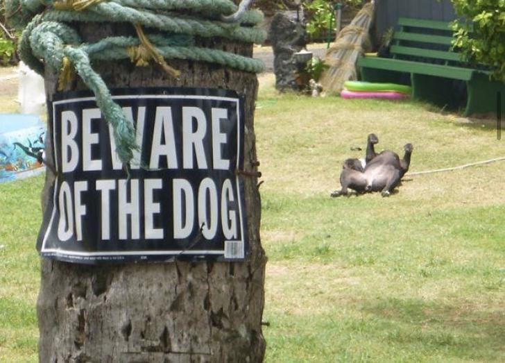 Grass - BEWARE OF THE DOG