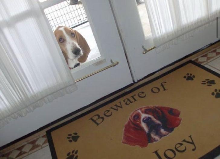Dog - Beware of Jpey