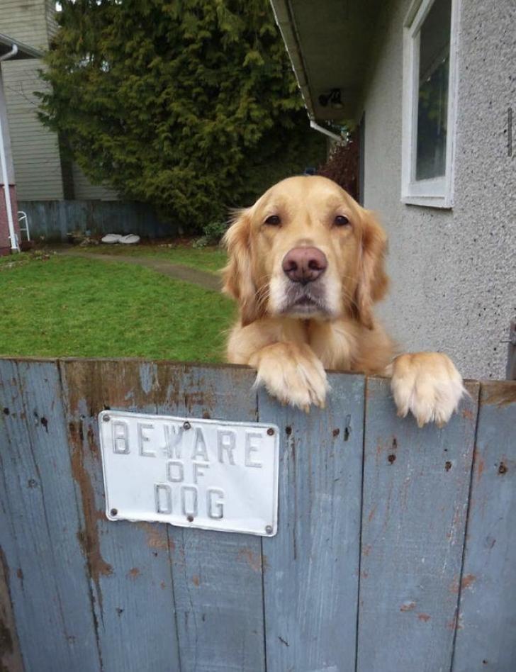 Dog - BEYARE OF DOG