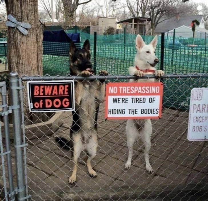 Mammal - BEWARE of DOG NO TRESPASSING WE'RE TIRED OF PAR HIDING THE BODIES EXCEPT BOB S