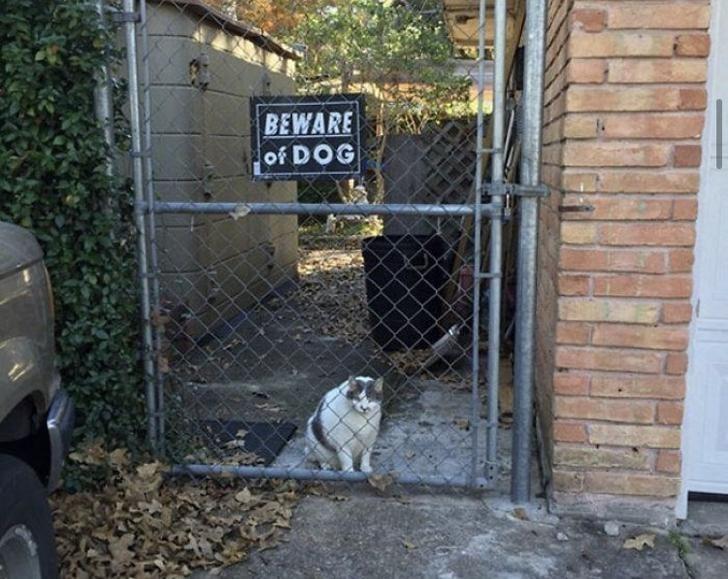 Canidae - BEWARE of DOG