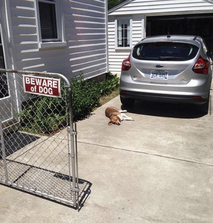 Vehicle door - UCR 0497 BEWARE of DOG