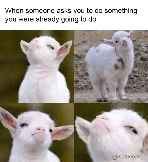Goats - When someone asks you to do something you were already going to do @memebase