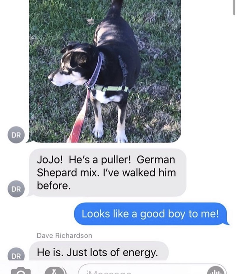 Dog - DR JoJo! He's a puller! German Shepard mix. I've walked him before. DR Looks like a good boy to me! Dave Richardson He is. Just lots of energy. DR