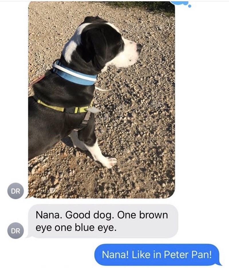 Canidae - DR Nana. Good dog. One brown eye one blue eye. DR Nana! Like in Peter Pan!