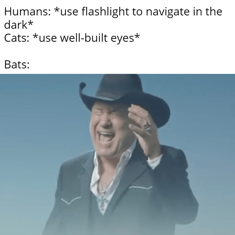 Text - Humans: *use flashlight to navigate in the dark* Cats: *use well-built eyes* Bats: