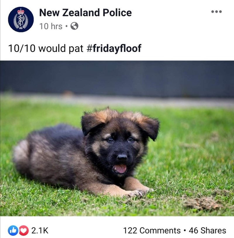Dog - New Zealand Police 10 hrs • O 10/10 would pat #fridayfloof DO 2.1K 122 Comments • 46 Shares