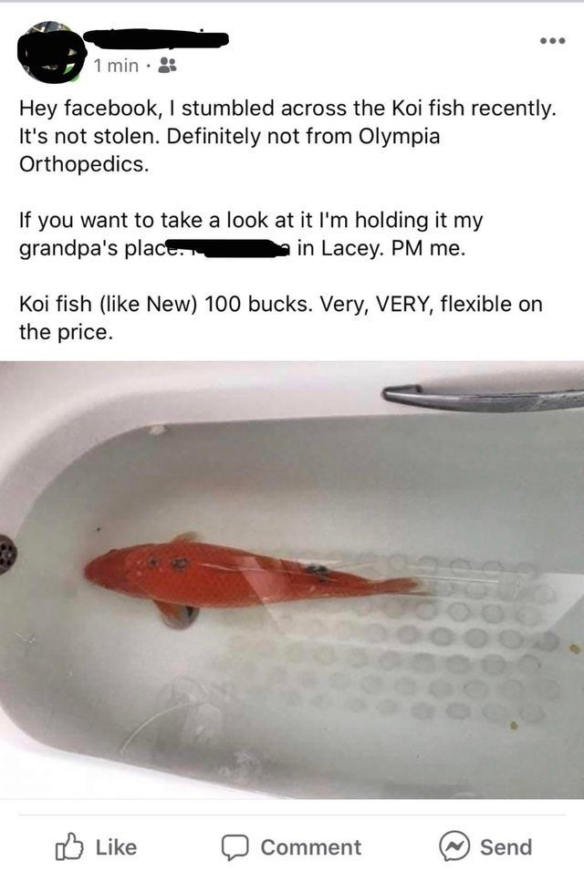 Font - 1 min · : Hey facebook, I stumbled across the Koi fish recently. It's not stolen. Definitely not from Olympia Orthopedics. you want to take a look at it l'm holding it my grandpa's place If in Lacey. PM me. Koi fish (like New) 100 bucks. Very, VERY, flexible on the price. O Like Send Comment