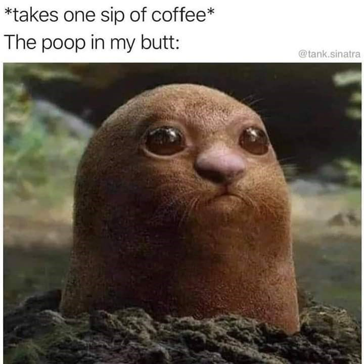 Fur seal - *takes one sip of coffee* The poop in my butt: @tank.sinatra