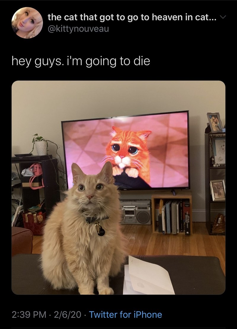 Cat - the cat that got to go to heaven in cat... @kittynouveau hey guys. i'm going to die 2:39 PM · 2/6/20 · Twitter for iPhone