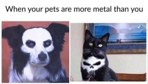 Photo caption - When your pets are more metal than you