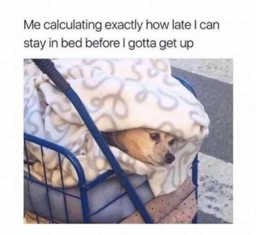 Companion dog - Me calculating exactly how late I can stay in bed before I gotta get up