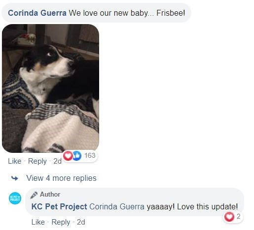 Canidae - Corinda Guerra We love our new baby.. Frisbee! 163 Like Reply 2d View 4 more replies Author KC Pet Project Corinda Guerra yaaaay! Love this updatel Like Reply 2d