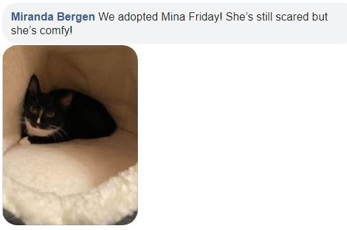 Cat - Miranda Bergen We adopted Mina Friday! She's still scared but she's comfy!