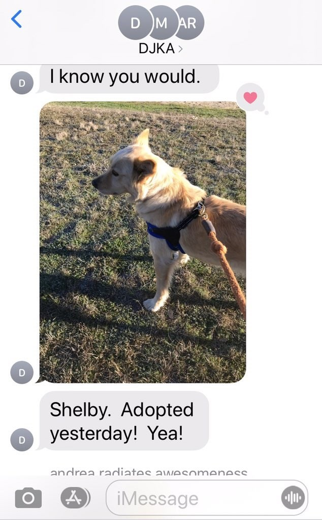 Canidae - D M AR DJKA > I know you would. Shelby. Adopted yesterday! Yea! andrea radiates a wesomeness iMessage