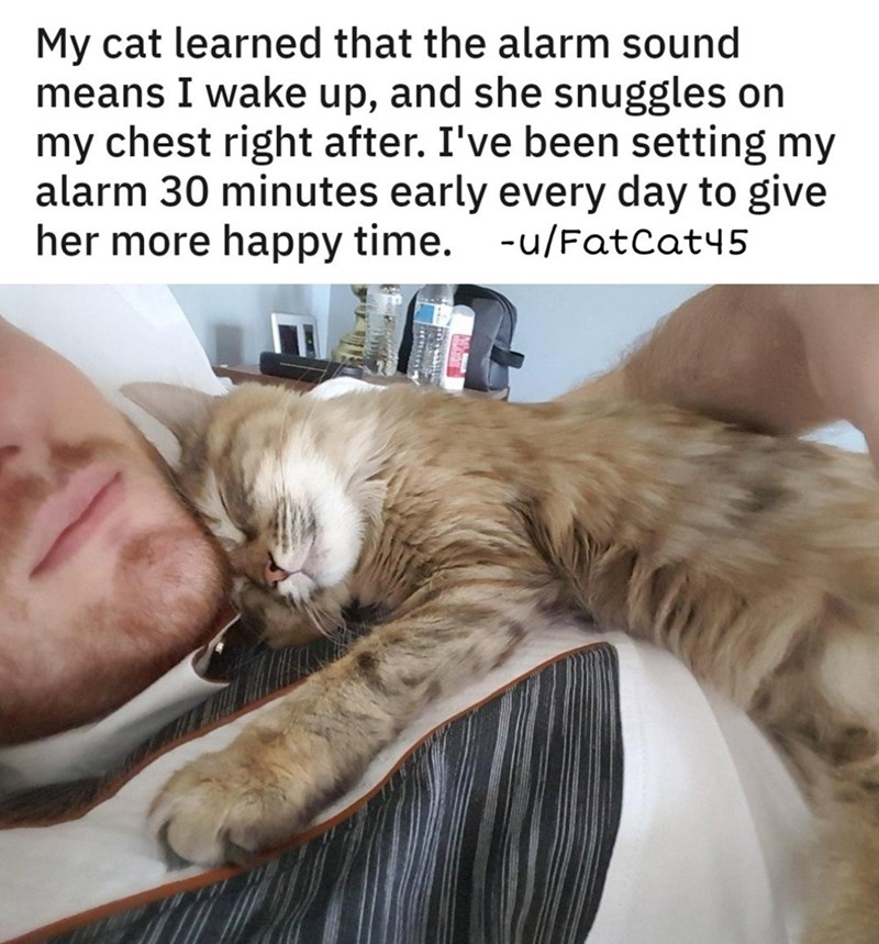 Cat - My cat learned that the alarm sound means I wake up, and she snuggles on my chest right after. I've been setting my alarm 30 minutes early every day to give her more happy time. -u/FatCat45