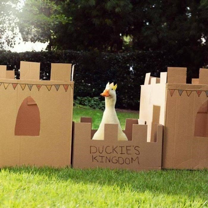 Grass - DUCKIE'S KINGDOM