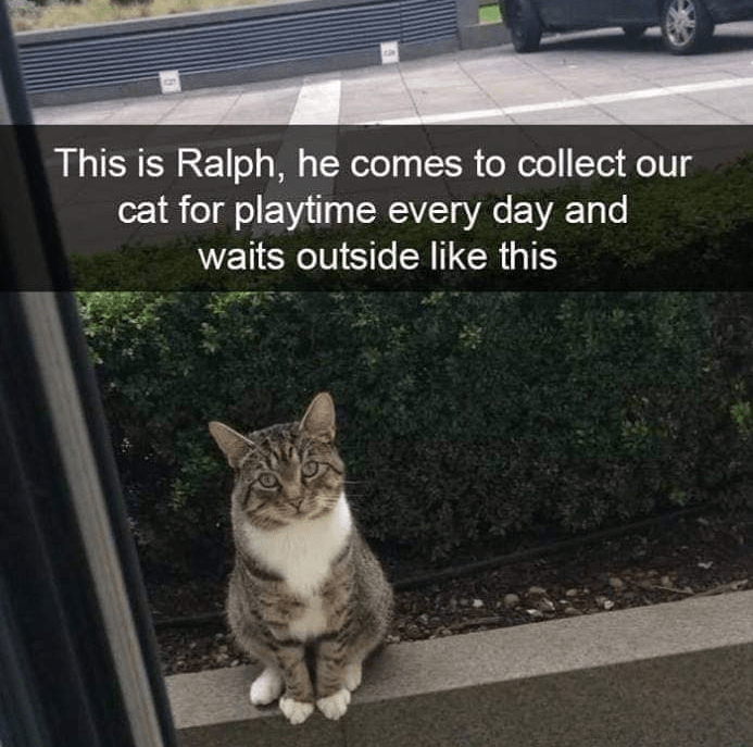 Cat - This is Ralph, he comes to collect our cat for playtime every day and waits outside like this