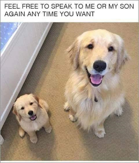 Dog - FEEL FREE TO SPEAK TO ME OR MY SON AGAIN ANY TIME YOU WANT