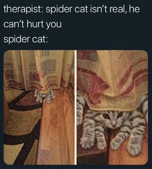 therapist: spider cat isn't real he can't hurt you spider cat: photo of a cat peeking from under a curtain with six legs