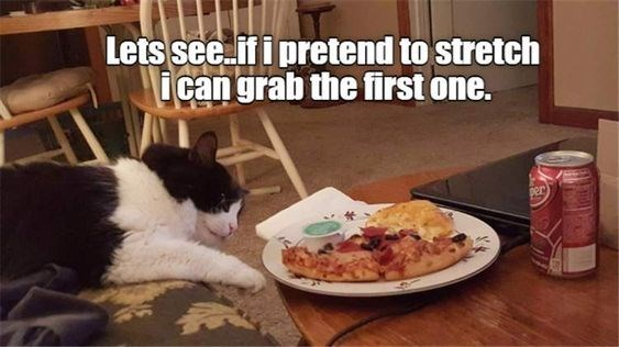 Cat - Lets see.if i pretend to stretch i can grab the first one. per