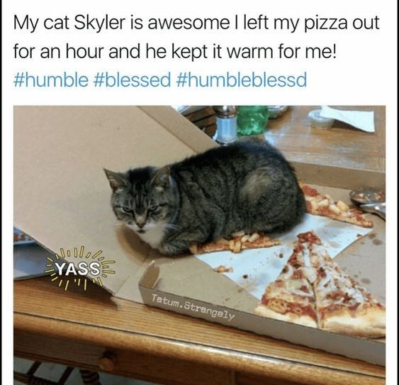 Cat - My cat Skyler is awesome I left my pizza out for an hour and he kept it warm for me! #humble #blessed #humbleblessd YASS ו י ןו Tatum.Strengely