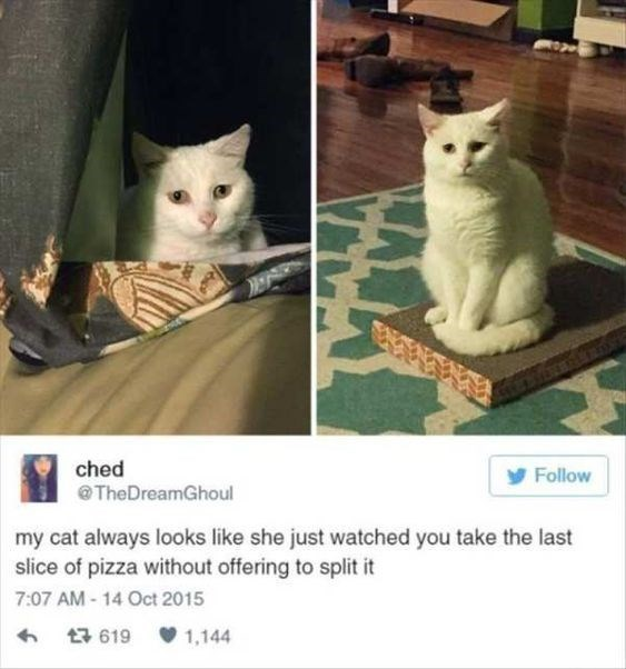 Cat - ched @TheDreamGhoul Follow my cat always looks like she just watched you take the last slice of pizza without offering to split it 7:07 AM - 14 Oct 2015 V 1,144 17 619