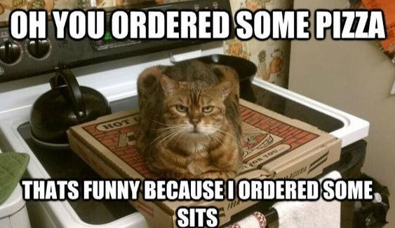 Cat - OH YOU ORDERED SOME PIZZA HOT THATS FUNNY BECAUSE I ORDEREDSOME OR TOU SITS